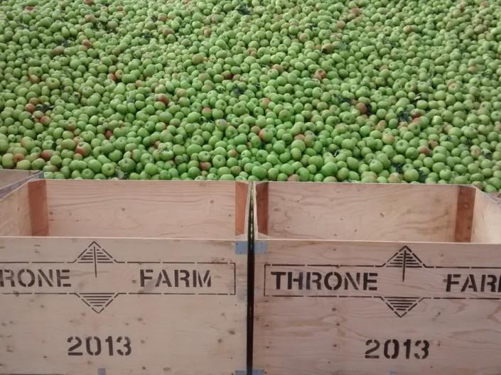 Throne Farm Apples