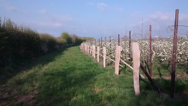 5 Acres Orchard