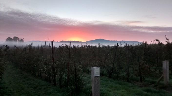 Sunrise at Throne Farm