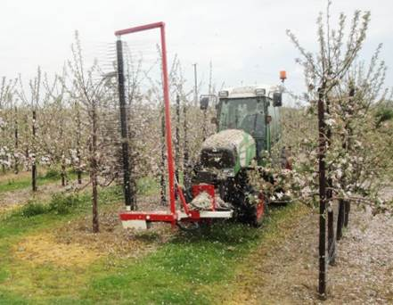 Mechanically thinning blossom with our Darwin thinner