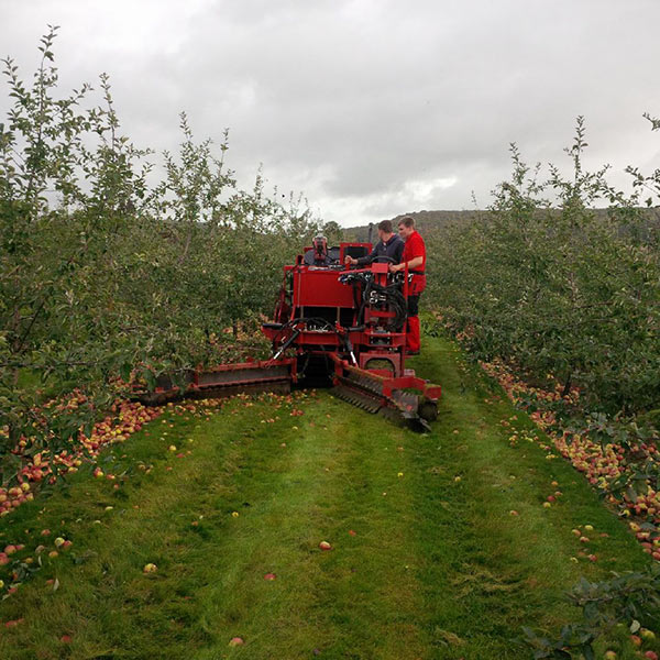 Our new cider apple harvester on demonstration