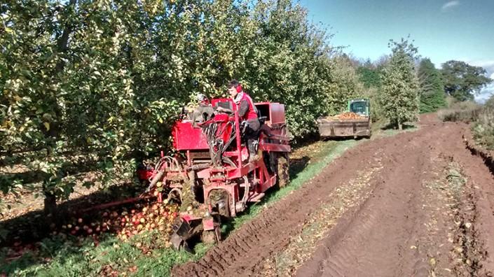 Throne Farm Harvest 2015