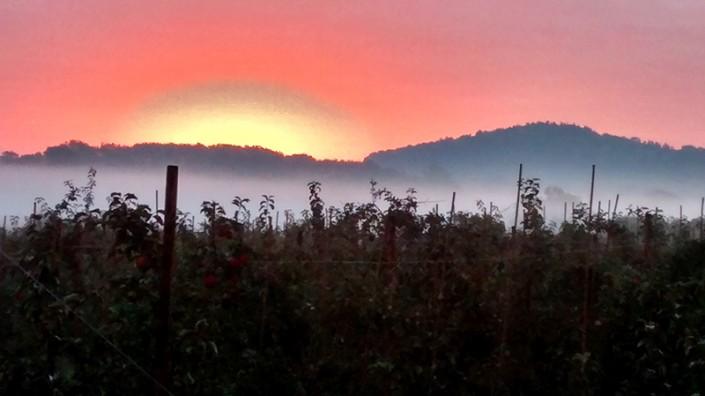 Sunrise Throne Farm Orchards