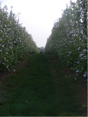 Throne Farm Orchards